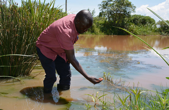 George Oliech, ICIPE researcher, checks the quality of swamp water in Kamgan village of Nyakach