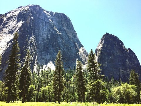 Trees In Front Of El Capitan Against Clear Sky In Yosemite National Park