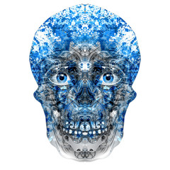 skull on a white background