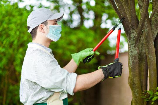 Professional gardener pruning a tree wearing a mask, coronavirus concept