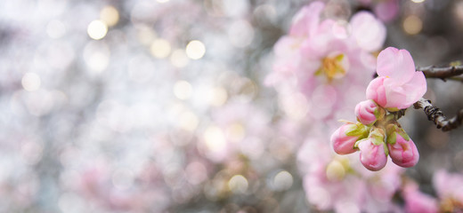 Fototapeta Spring background with flowers
