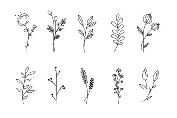 Hand drawn flower branch set. Simple floral graphic sketch with leaves sprig silhouettes, outline style isolated on white background. Vector illustration