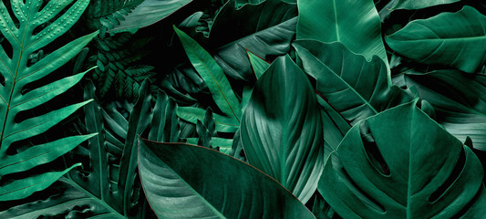 Wall Mural - closeup nature view of green monstera and fern leaf background. Flat lay, dark nature concept, tropical leaf