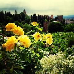Foto auf AluDibond Gelb Close-up Of Yellow Flowers On Landscape