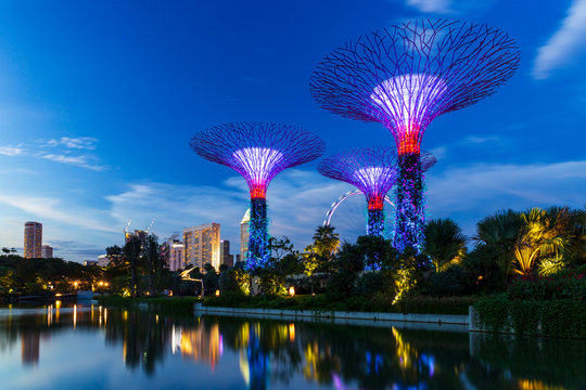 The supertrees of Garden by the Bay before the Flyer at dusk in Singapore.