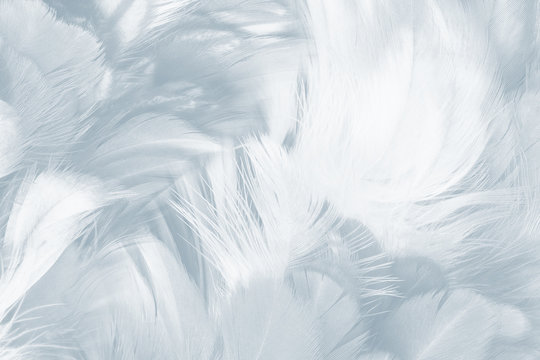 Beautiful white baby blue colors pastel tone feather pattern texture cool background for decorative design wallpaper and other