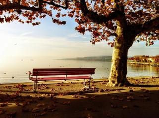 Park Bench Under Autumn Tree At Riverside