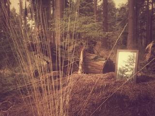 Foto auf Gartenposter Cappuccino Trees On Countryside Landscape