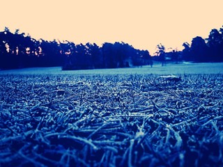 Frozen Grass In Park