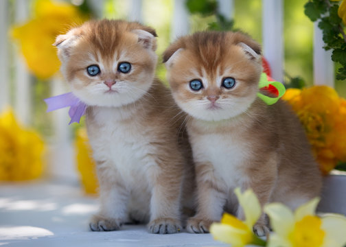 Two little kittens sit on a background of flowers in summer.