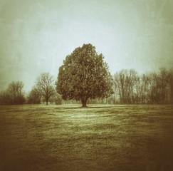 Foto auf Gartenposter Olivgrun Trees On Landscape Against Sky