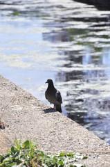 Fototapeta Ptak  obraz