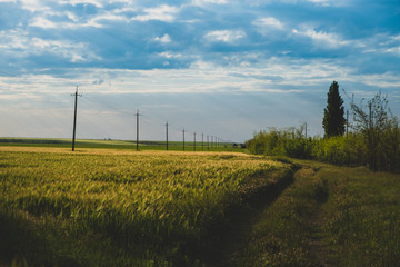 rural landscape with a road. farm land, nature, agricultural landscape. abstract backgrounds of countryside