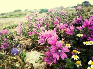 Fototapeten Gelb Close-up Of Flowers In Landscape