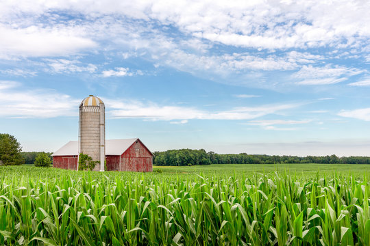 Classic Red Barn in a Corn Field