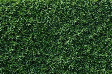 trimmed bush background
