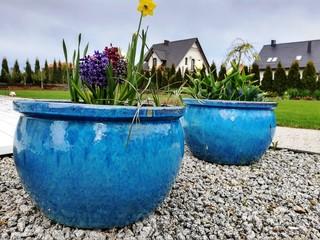 Niebieskie donice w ogrodzie.