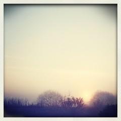 Aluminium Prints Dark grey Silhouette Of Bare Trees In Field During Sunset