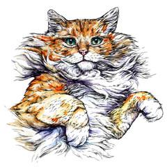 Foto op Canvas Hand getrokken schets van dieren Cat portrait. Hand drawn watercolor style vector illustration