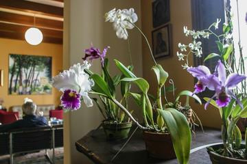 Foto op Canvas Orchidee orquidea
