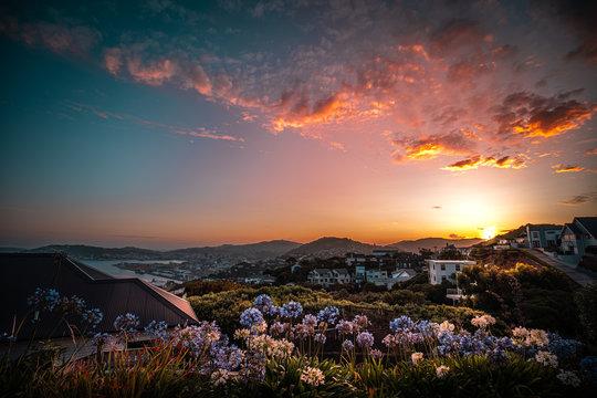 Wildflower against sunset in Khandallah, Wellington, New Zealand