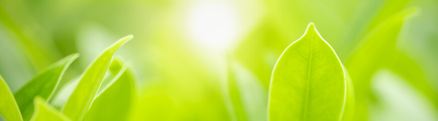 Keuken foto achterwand Lime groen Closeup beautiful attractive nature view of green leaf on blurred greenery background in garden with copy space using as background natural green plants landscape, ecology, fresh cover concept.