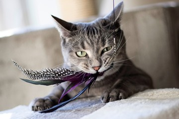 Obraz Close-up Of Cat Playing With Feathers - fototapety do salonu