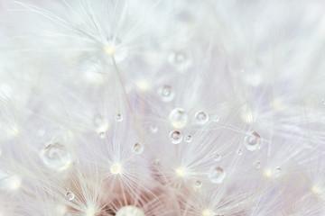 Photo sur Aluminium Pissenlit Beautiful dandelion flower, closeup view