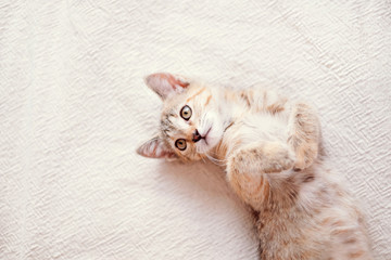 Cute kitten lying on back with paws up on sofa.