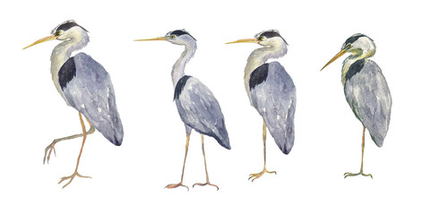 Watercolor set heron birds isolated on white background. Hand drawing illustration of Grey heron. Bird with long legs. Perfect for cards, print, sticker, greeting card.
