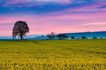 Sunrise and rapeseed