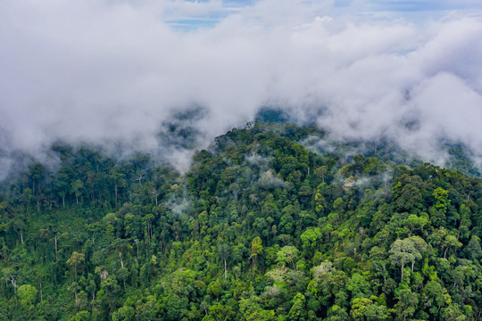 Aerial drone view of mist and clouds rising above a dense, pristine tropical rainforest following a thunder storm