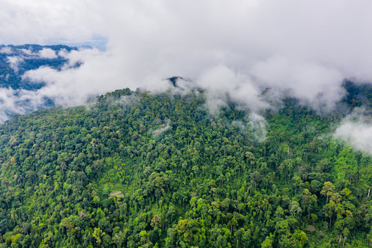 Aerial view of mist and clouds rising from a beautiful tropical rainforest following a large rain storm.