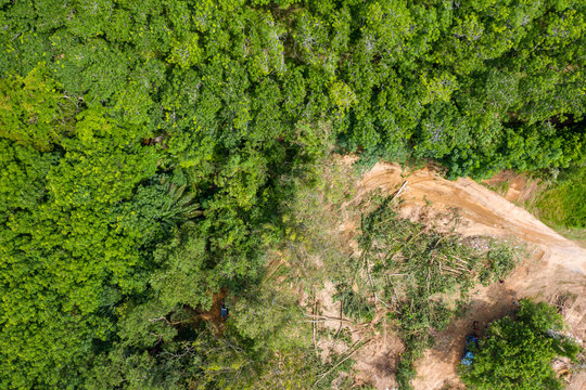 Aerial drone view of logging operatons and active deforestation of a tropical rainforest contributing to habitat destruction and man-made climate change