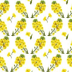 Pattern rape flowers, canola. Brassica napus. Seamless vector background.
