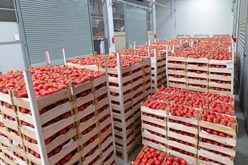Distribution Warehouse Storage Tomatoes
