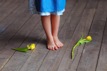 Little girl in white-and-blue dress is standing on the wooden floor with yellow tulips, legs close-up. Spring mood. Tender age. The eve of the International Women's Day. Mother's Day