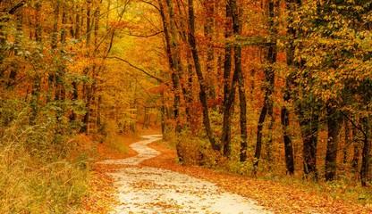 Aluminium Prints Autumn Footpath Amidst Trees In Forest During Autumn