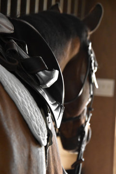 Close up of an english saddle on a brown horse