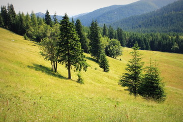 Foto auf AluDibond Melone Trees On Countryside Landscape