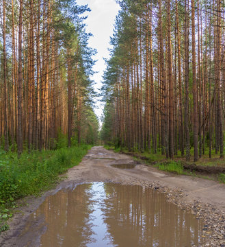 Road with a puddle in forest
