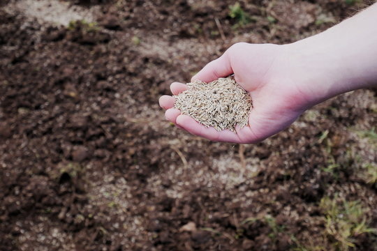 Man's hand spreading grass seed onto soil