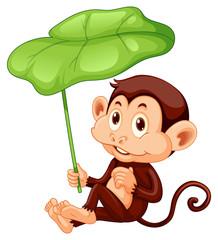Wall Mural - Cute monkey holding leaf on white background