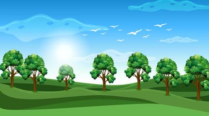 Keuken foto achterwand Kids Scene with many trees in the field