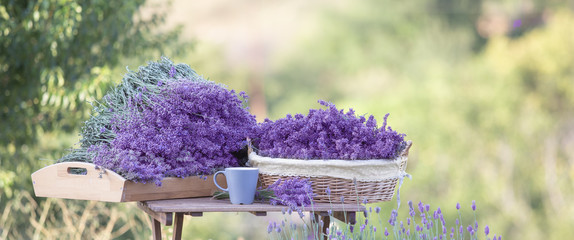 Harvesting of lavender. A basket filled with purple flowers stands on a wooden table on a...