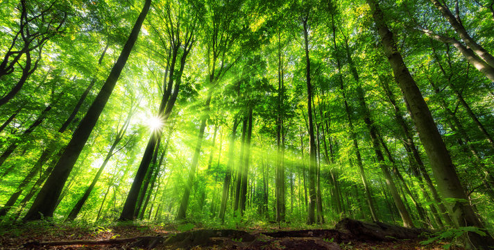Vibrant panoramic scenery of illuminated foliage in a lush green forest, with vibrant colors and rays of sunlight