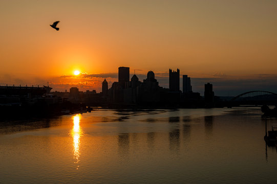 Pittsburgh Sunrise over River with Bird