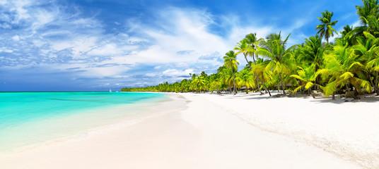 Obraz Coconut Palm trees on white sandy beach in Caribbean sea. - fototapety do salonu