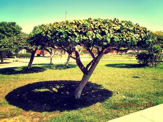 Foto auf Gartenposter Gelb Schwefelsäure Trees On Landscape Against Clear Sky