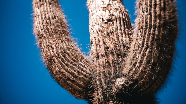 Close up of a cactus